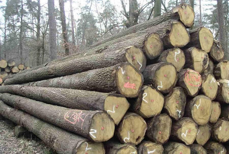Bàn ghế gỗ sồi nga có tốt không? nhiều người quan tâm