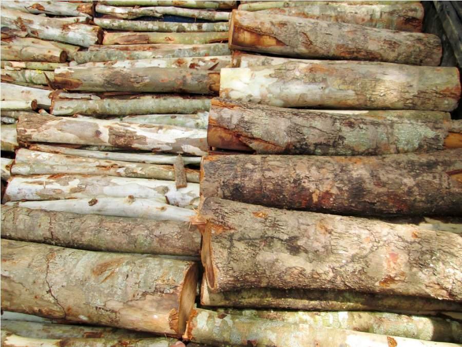 Có mấy loại gỗ tràm?gỗ tràm thuộc nhóm mấy?