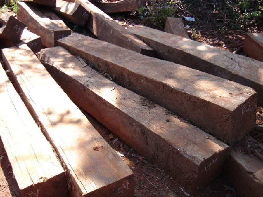 giá các loại gỗ trắc rất cao