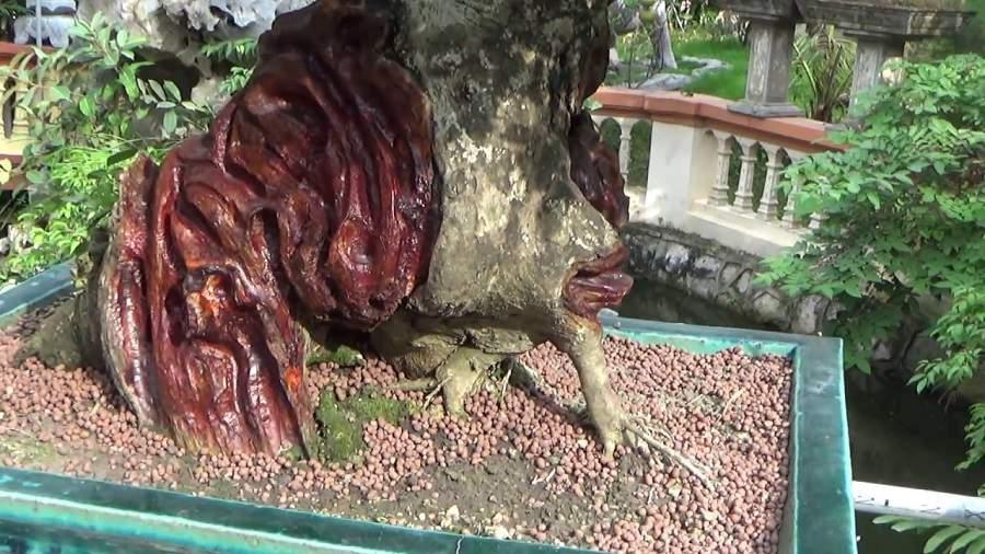 Thân cây gỗ trắc