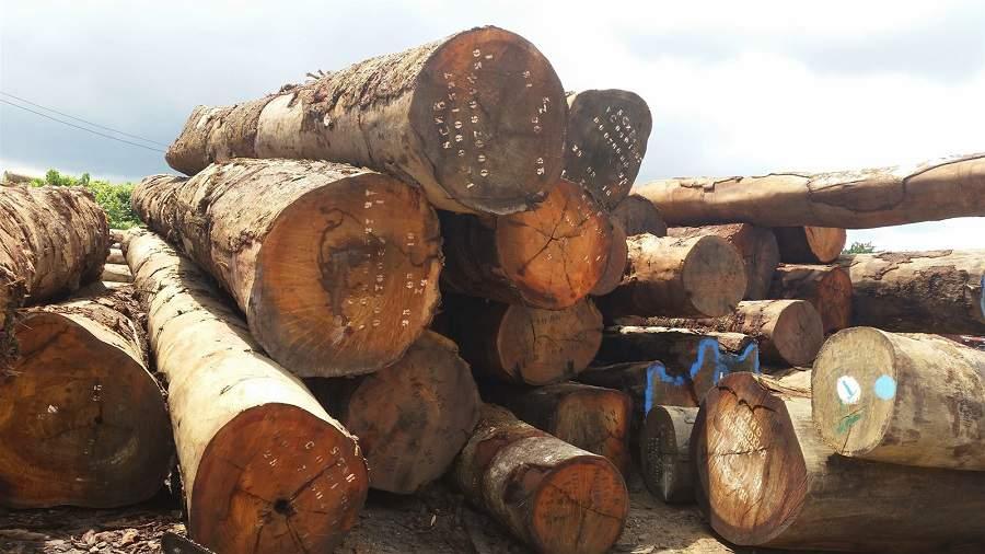 các loại gỗ quý hiếm bền đẹp