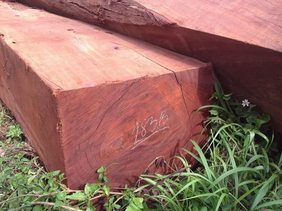 Cách nhận biết các loại gỗ quý