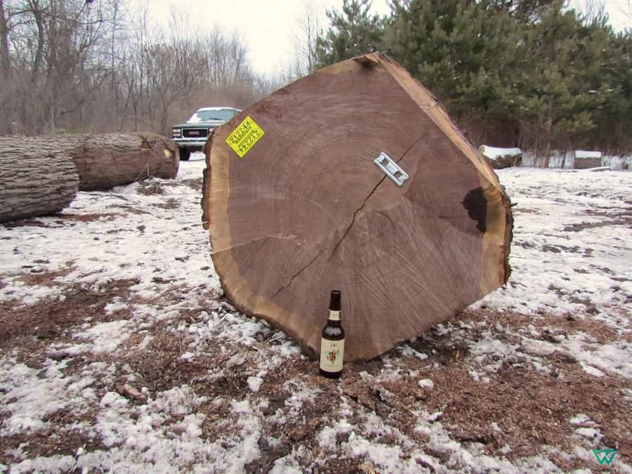 gỗ óc chó việt nam