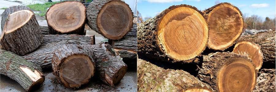 gỗ óc chó có đắt không?