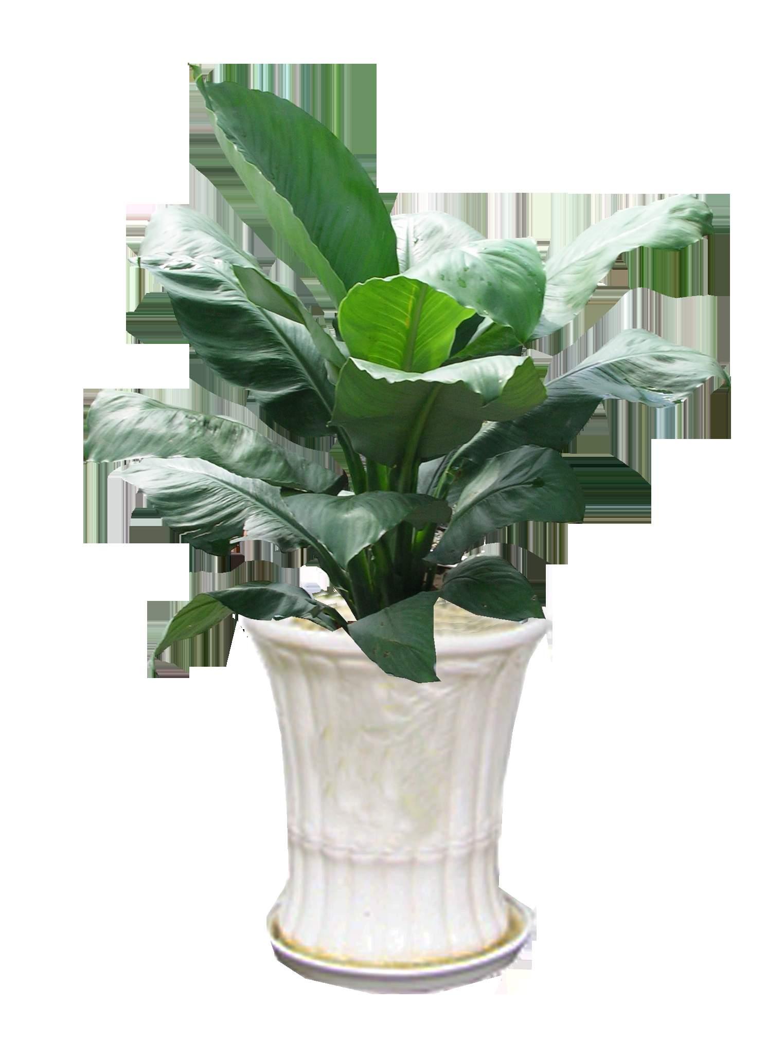 Hoa lan ý mỹ đẹp lung linh