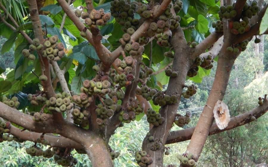 Nên trồng cây gì trước cửa nhà phong thủy