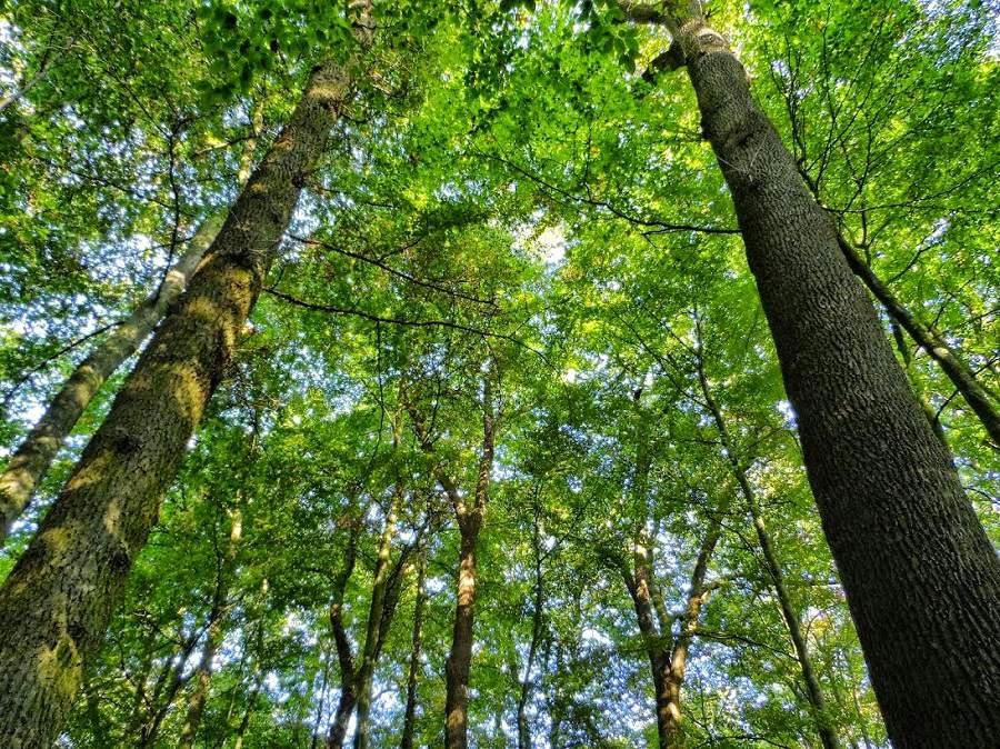 gỗ xoan đào có bị mối mọt không rất nhiều người quan tâm