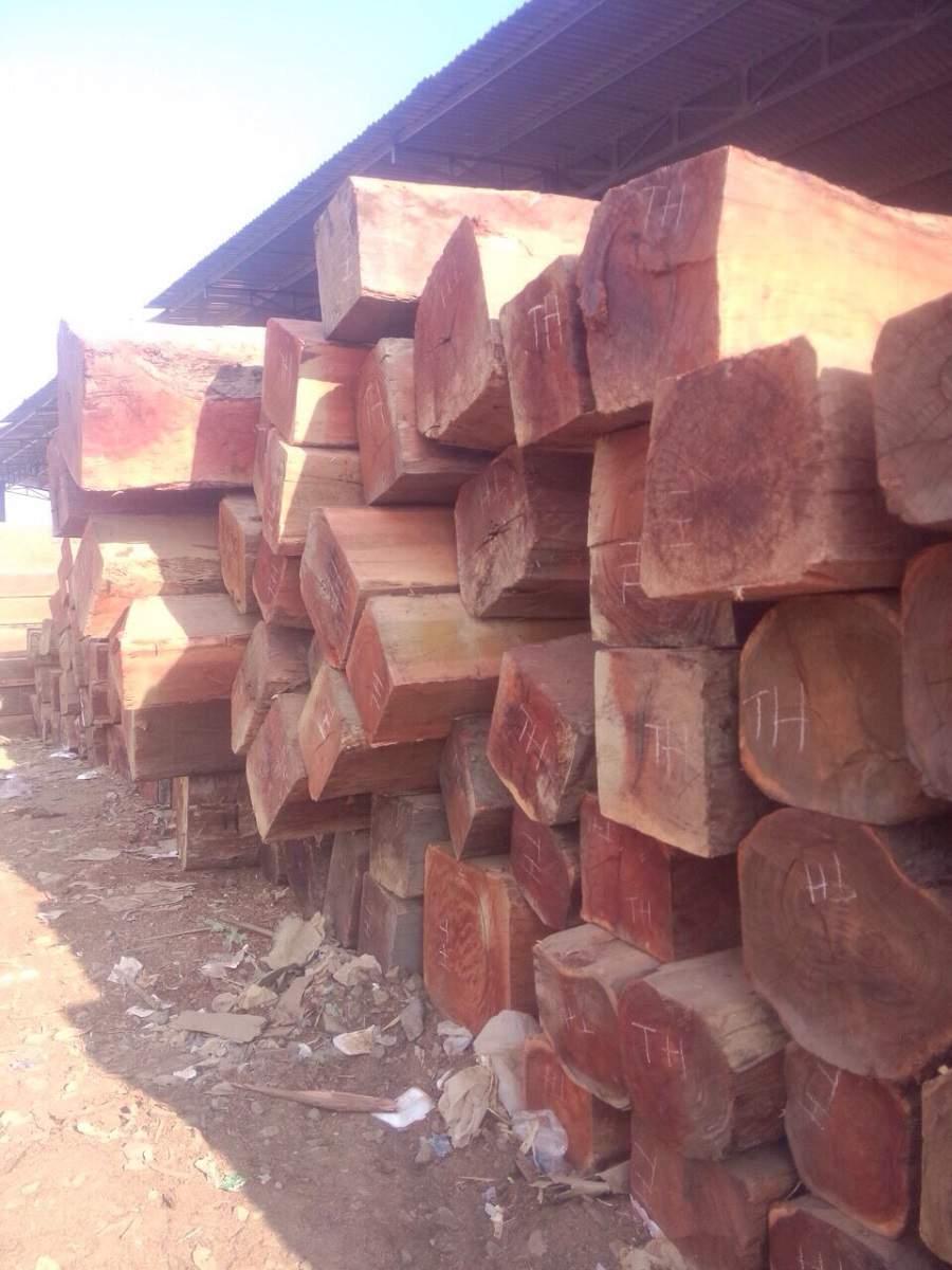 gỗ gụ nam phi có tốt không
