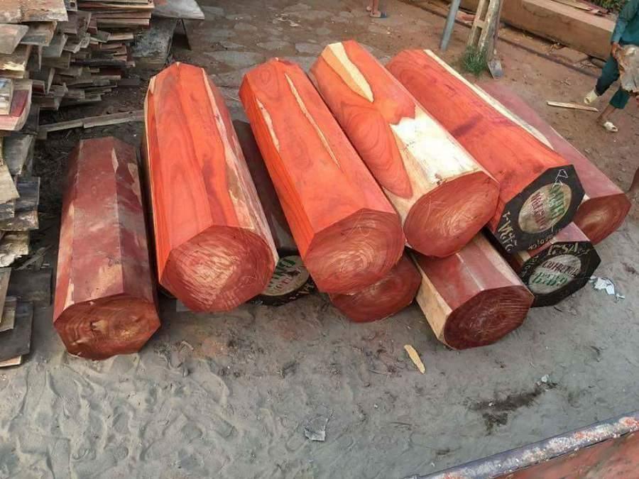 gỗ hương đá nam phi có tốt không