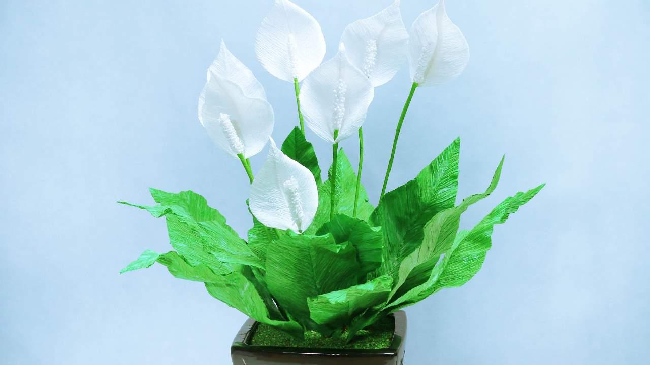 thiết kế chung cư mini bằng hoa lan ý