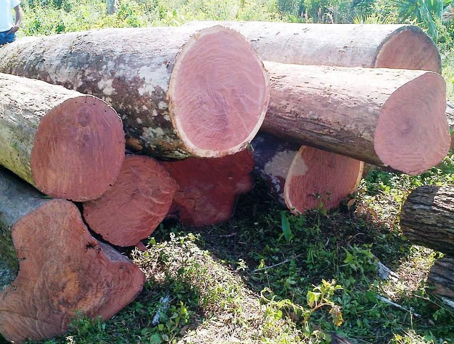 Phân biệt gỗ hương đỏ và hương vân