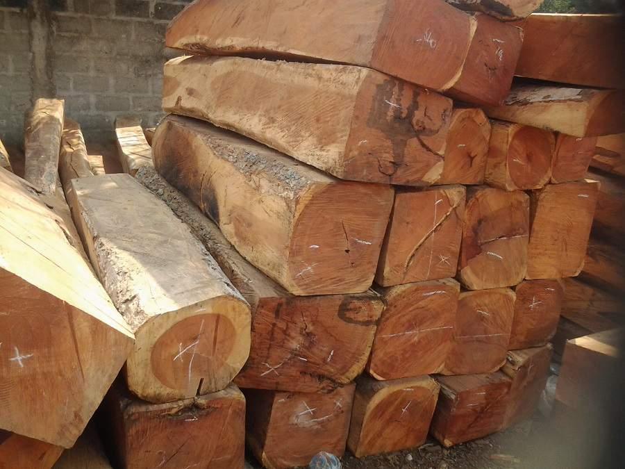 gỗ hương ứng dụng cho nội thất salon gỗ hương