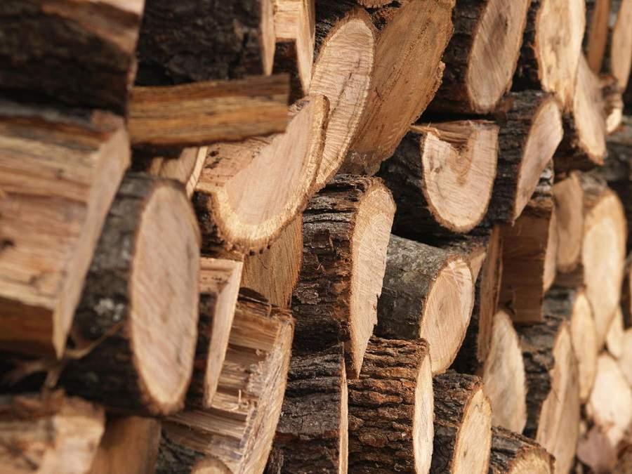 so sánh gỗ cao su và gỗ thông có sự khác nhau