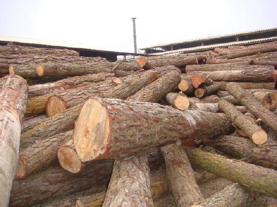 gỗ thông