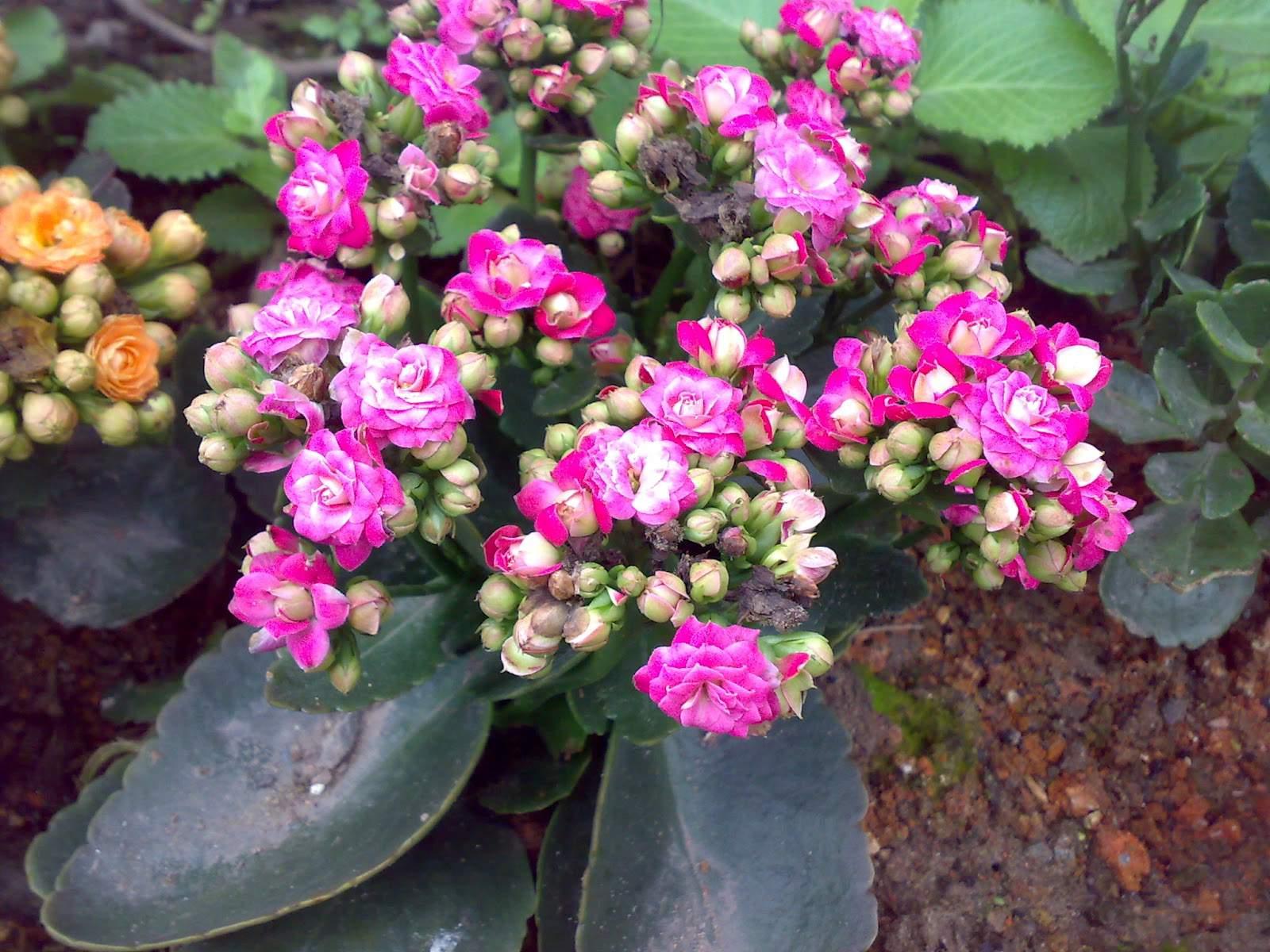 thiết kế chung cư mini  đẹp màu hoa rực rỡ