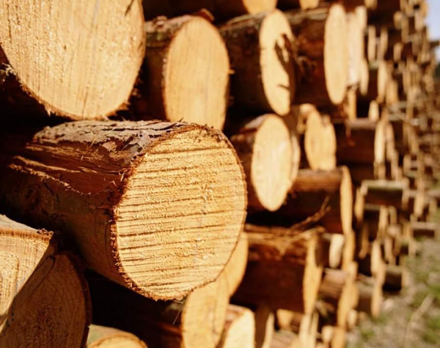 Ưu nhược điểm của gỗ tần bì