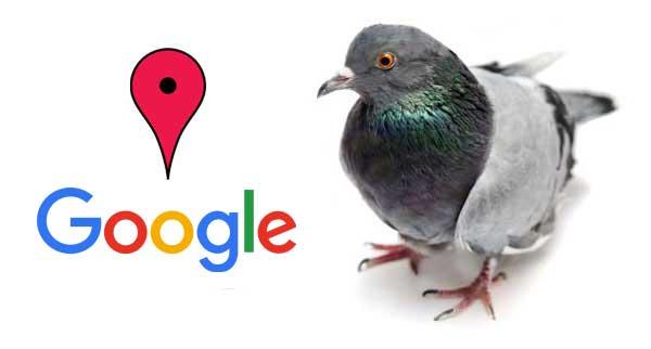 thuat-toan-Google-Pigeon