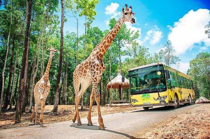 phu-quoc-safari