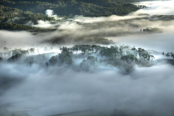 da-lat-fog