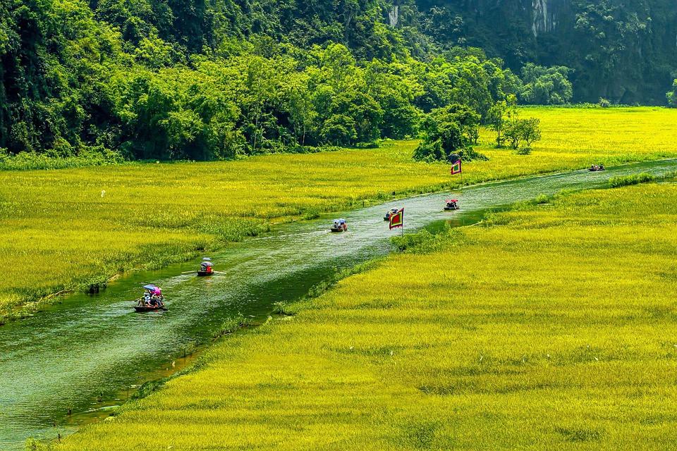 ninh-binh-tam-coc-rice-field