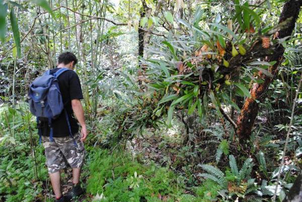 laos-orchid-trek-tour