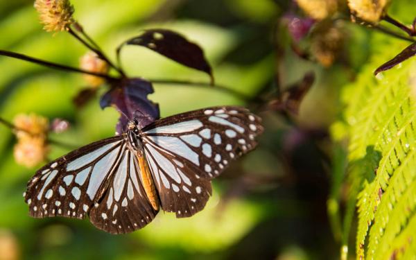 luang-prabang-butterfly-park