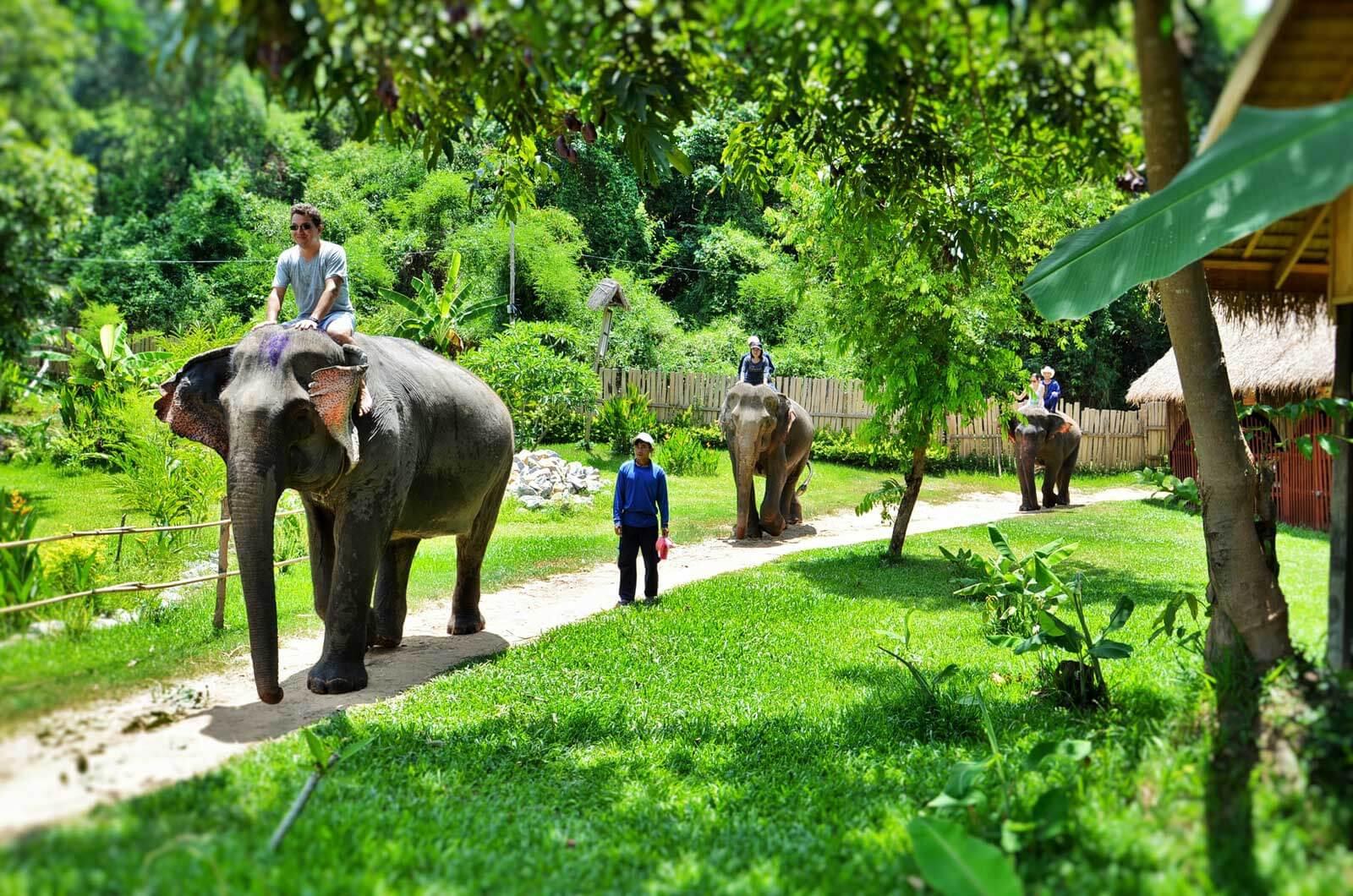 luang-prabang-elephant-camp-2