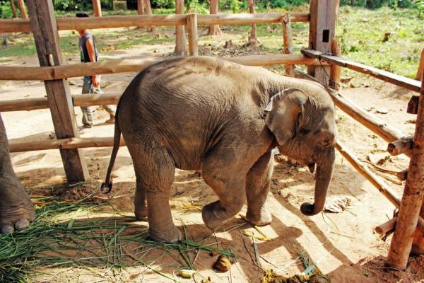 luang-prabang-elephant-village-2
