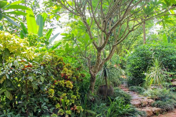 luang-prabang-pha-tad-ke-botanical-garden-path