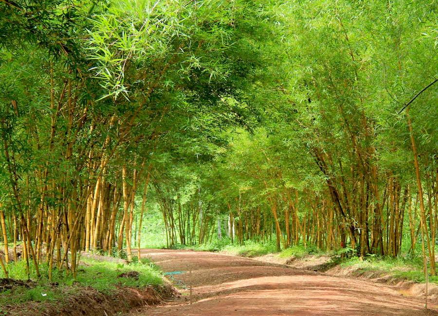 luang-prabang-pha-tad-ke-botanical-garden
