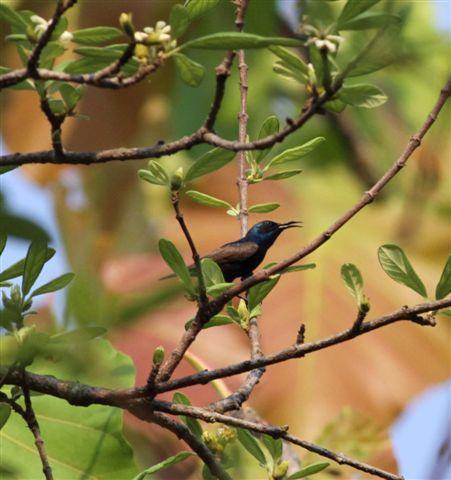 bmt-yokdon-national-park-7