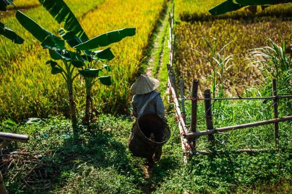 mai-chau-farmer