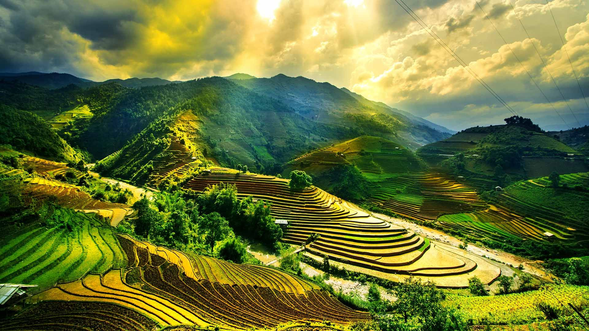 vietnam-paddie-fields