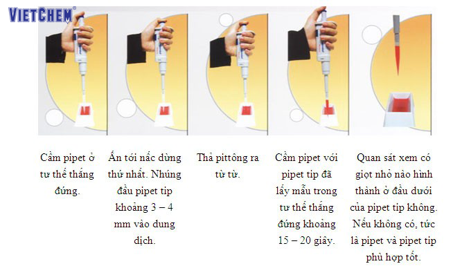 ống hút pipet