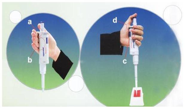 Hướng dẫn cách cầm ống hút pipet đúng cách