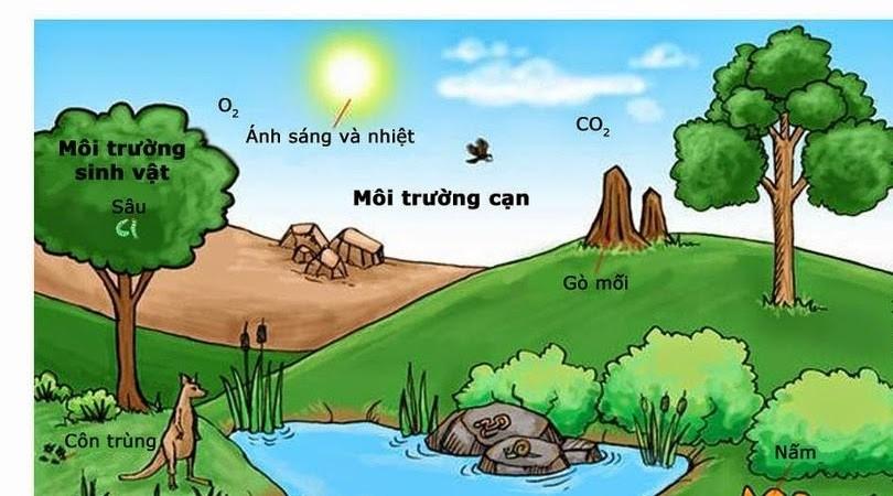 Ô nhiễm môi trường là gì? nguyên nhân hậu quả và biện pháp