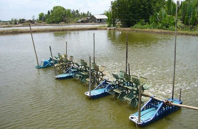 Sử dụng tỷ trọng kế đo độ mặn nước ao nuôi tôm để điều chỉnh sao cho hợp lý