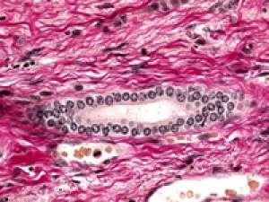 Fuchsin acid (C.I. 42685) Certistain® 25 g Merck Đức