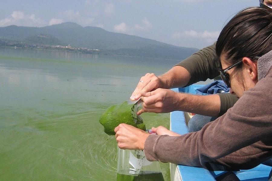 Thuốc tím dùng để xử lý nước nuôi thủy sản, diệt tảo