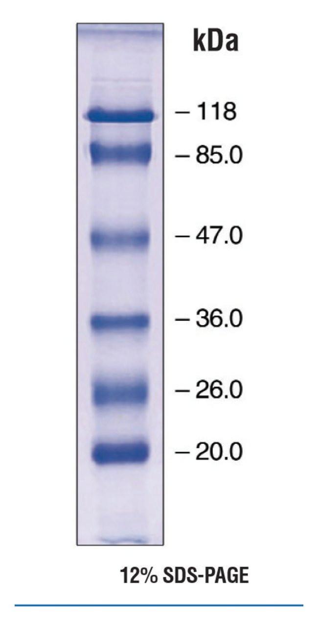 EZ-Run prestainedprotein marker 2EA Bioreagents