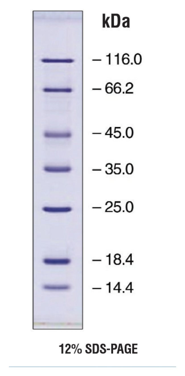 EZ-Run protein marker 1EA Bioreagents