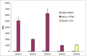 MILLIPLEXMAP STAT Cell Signaling Magnetic Bead 5-Plex Kit - Cell Signaling Multiplex Assay Merck