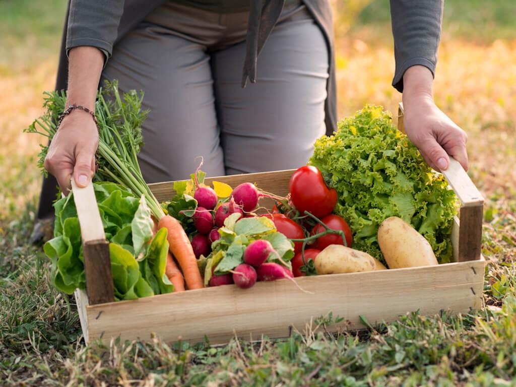 Organic là gì