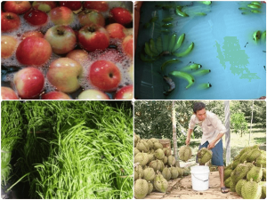Đâu là những chất bảo quản được phép sử dụng trong thực phẩm?