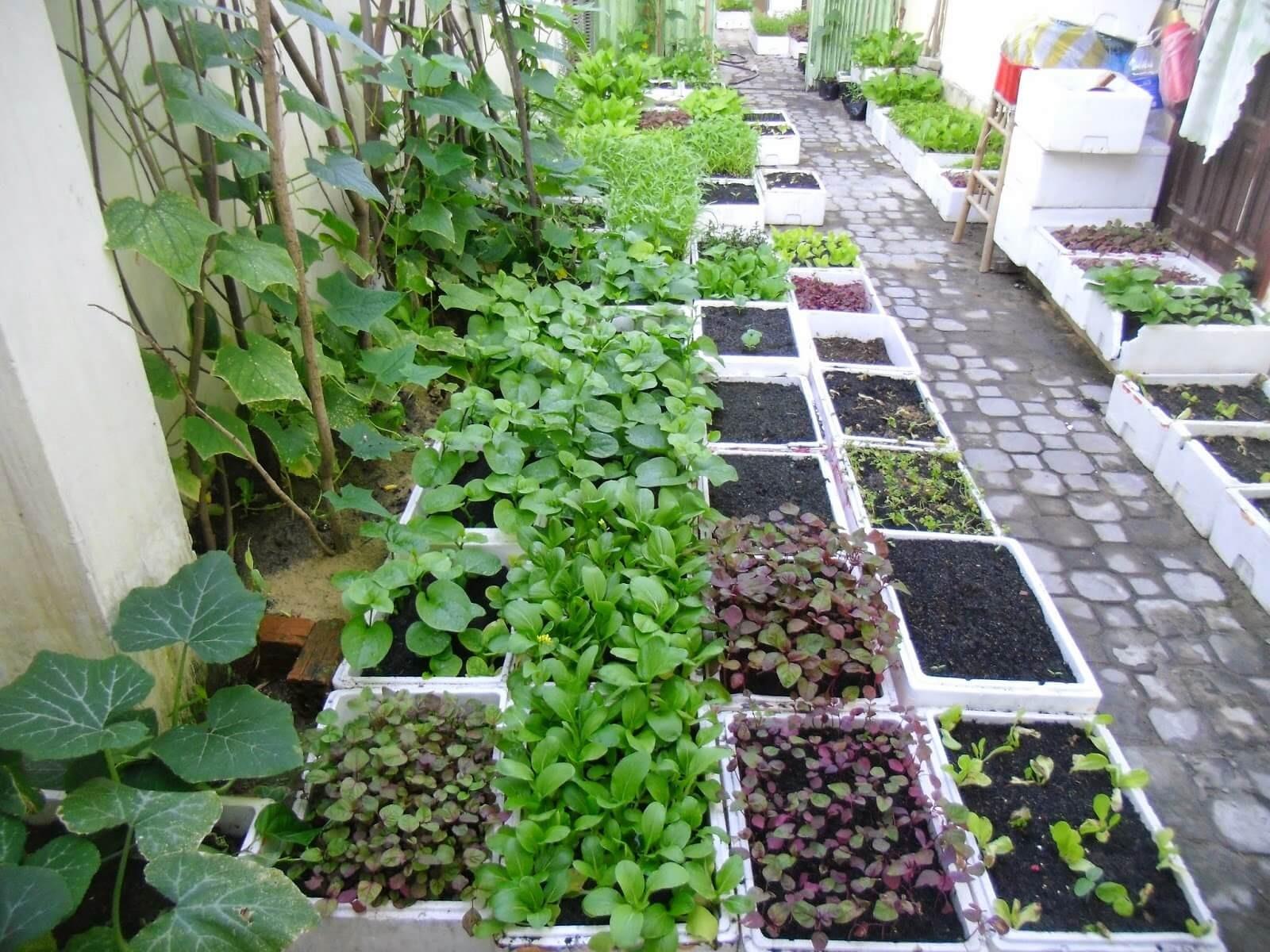 Chế phẩm EM có vai trò quan trọng đối với cây trồng