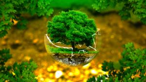 Môi trường là gì? Những biện pháp để bảo vệ môi trường