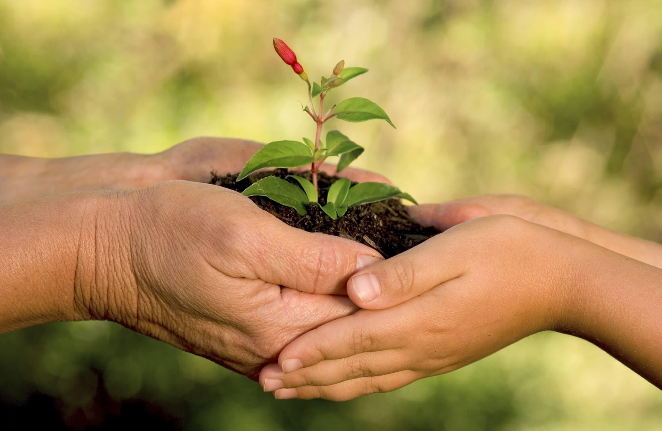 Vai trò của môi trường đối với sự sống
