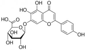 Scutellarin 20mg ChemFaces