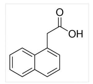 1-Naphthaleneacetic acid 25g Sigma