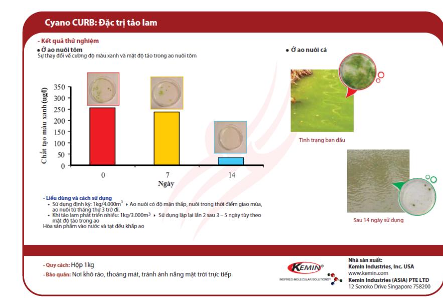 Quy trình diệt tảo lam bằng Cyano curb
